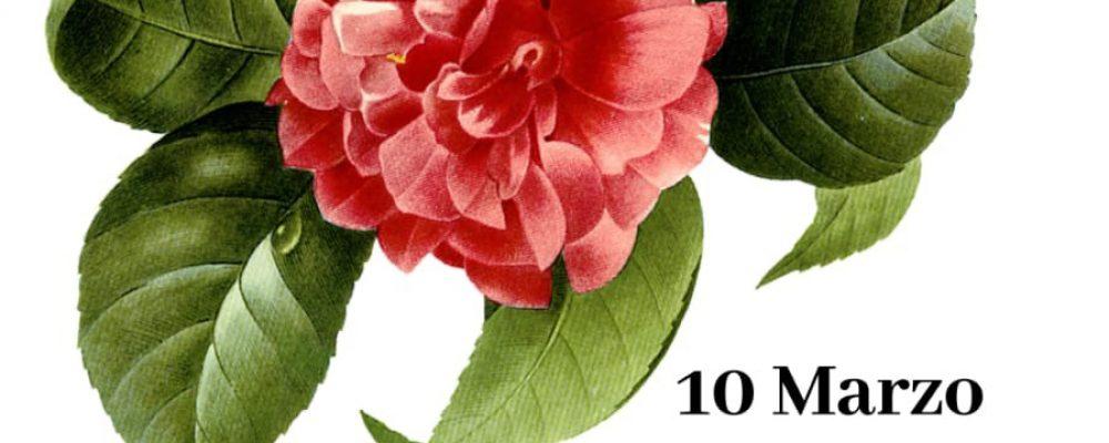 Actividades para conmemorar o 8 de marzo